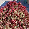 hibiscus_iranian_tea